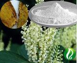 Extrait d'alimentation d'usine Fallopia japonica resvératrol 98 %