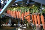 Морковь Китая 2017 новых урожаев очень вкусный свежая