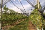 بلاستيكيّة بستان مضادّة حبّة برد شبكة زراعيّة [أبّل تر] مضادّة حبّة برد شبكة يجعل في الصين