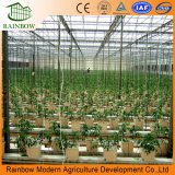 야채를 위한 다중 경간 PC 장 또는 널 온실 또는 꽃 또는 플랜트