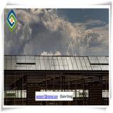 De grote van de Hydrocultuur van de Grootte Commerciële Serre van het PC- Blad voor Tomaat