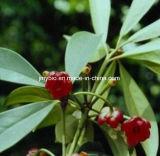 Выдержка Verm Illicium пищевой добавки 10%~98% Shikimic кисловочная