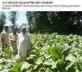 De Meststof van de Grond van Unigrow op Tabak die met Goed Resultaat op de Ziekten van het Mozaïek planten