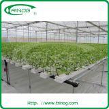 Sistema de hidroponia NTF para cultivo de alface