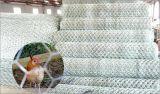 電流を通されたおよびPVC上塗を施してある鳥動物は六角形の金網/金網の網をおりに入れる