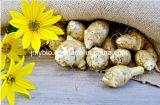 Inulin des Zichorienwurzel-Auszug-4% Chicoric der Säure-90%-98% Synanthrin
