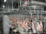 Schlachten-Zeile --Huhn, Ente, Gans