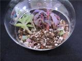 Floreros de cristal para la decoración