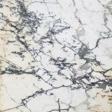 [فكتوري بريس] طبيعيّة يصقل [شنس] أبيض رخام لوح