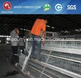 La volaille de cage de couche de poulet posent le système de cage de couche de batterie de cage
