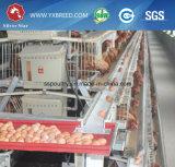 Оборудование птицефермы бондаря цыпленка ячеистой сети (A3L120)