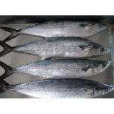 Bevroren Spaanse Makreel (SM01)