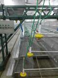 Apparatuur van de Kooien van Poul Tech Day de Old Chicken voor Verkoop (een Frame van het Type)