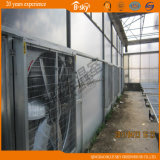 Polycarbonate Sheet Wall를 가진 높은 Quality Film Roof Greenhouse