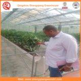 토마토 꽃을%s 유리제 농업 녹색 집