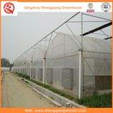 Agricultura / comercial PE Film Tunnel Green House para morango / rosa