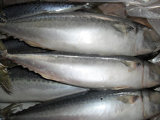 Pacific Mackerel 400g