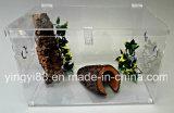 Fabricante acrílico novo de Shenzhen da gaiola do Terrarium do réptil