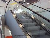 Vidro laminado endurecido com AS/NZS, certificado da escada rolante do Ce