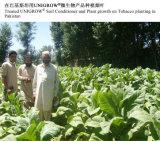 Bio fertilizante para alguma colheita, fruta de Unigrow, plantação vegetal