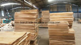 1270mm-2520mm Birch Bois Placage Birch Core pour contreplaqué