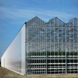 4мм ясно/ диффузным садоводство стекло для выбросов парниковых газов в коммерческих целях