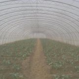 Green House PE insecte agricole net