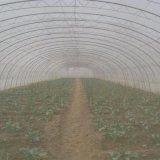 Rete agricola dell'insetto del PE della serra