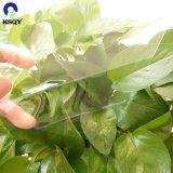 Hoja rígida del animal doméstico del fabricante de China del animal doméstico plástico de la hoja