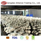 Champignon de champignons chinois entier congelé