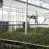 Sistema de irrigação por gotejamento para estufa de vidro hortícola