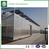 温室装置の農業の温室のプラスチックフィルムの温室