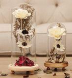 Di campana di vetro di vetro libero con la base di legno