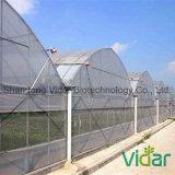 Пленка парника анти- Co-Extrusion PE ЕВА вызревания UV прозрачная