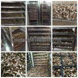 [غنغزهوو] صاحب مصنع صناعيّة فطر خضرة مجفّف