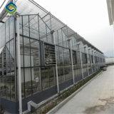 [سينبولي] دفيئة زجاجيّة لأنّ نباتيّة ينمو
