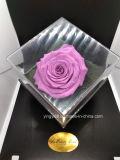 Hermoso cuadro rosa acrílico conservados cuadro flores duran para siempre