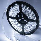 Lampada della striscia di alta qualità 2835 LED di RoHS DC24V 12V SMD del Ce