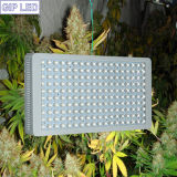 Diodo emissor de luz Grow Light da GIP 5W Chips 900W 1000W 12-Band