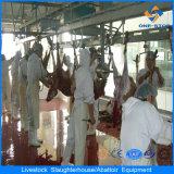 300 per strumentazioni complete della linea di macello delle pecore di giorno