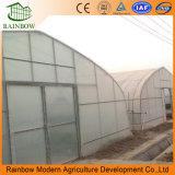 Tunnel Agricole Film Couvert en Plastique Large Single Span Greenhouse Commercial