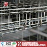 Cage de batterie de fermes avicoles de l'Algérie avec le ventilateur de refroidissement de ventilation