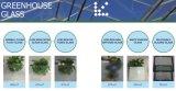 4mm niedriges Eisen zerstreutes Gartenbau-Glas für Gewächshaus