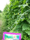 어떤 식물성 설치에 Unigrow 농업 비료