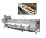 Tipo clasificadora de la fruta y verdura automática, cebolla, niveladora del compaginador Og-606 de la patata