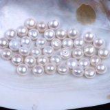 13mmから13.5mmボタンの形の淡水の緩い真珠