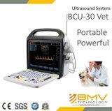 Digital-Ultraschalldiagnosedarstellung-System färben