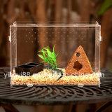새로운 아크릴 파충류 Terrarium 서식지 애완 동물 감금소