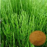 Horsetailのエキスの粉またはEquisetumのArvense有機性無水ケイ酸有機性L. /7の%の