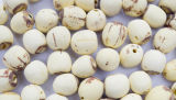 Semilla de loto orgánico, semilla de loto china